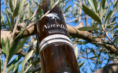 Launch Novello 2017 – Feast of the first oil